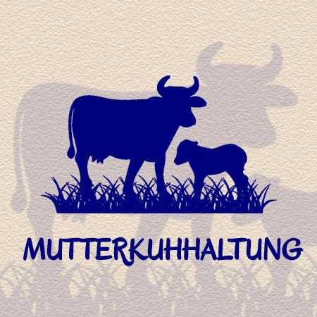 Mutterkuhhaltung bei der AGRO-Fleischrind GmbH