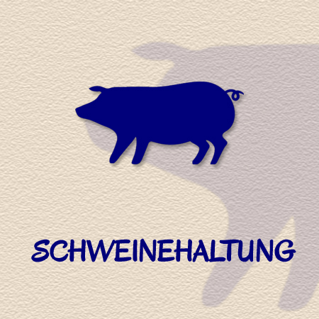 Schweinehaltung als Geschäftszweig der Methauer AGRO-Agrarprodukte GmbH