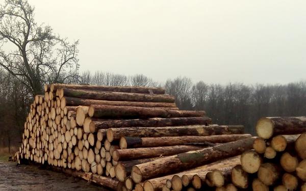 Stammholz der AGRO-Fleischrind GmbH